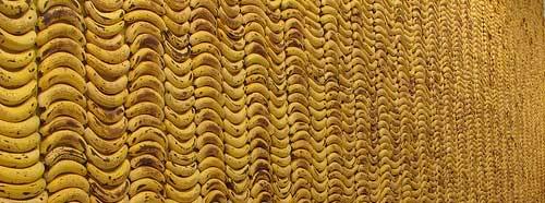 Banana Wall